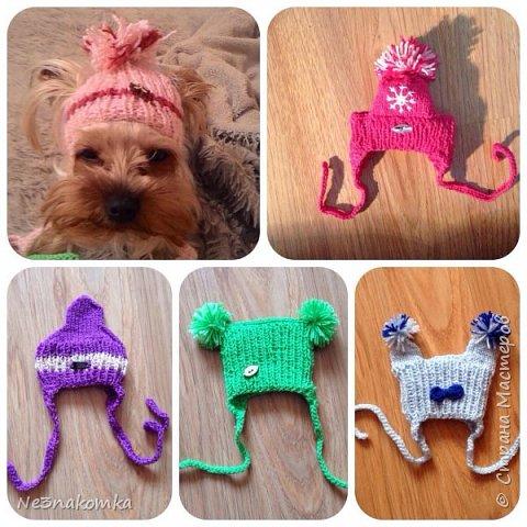 Всем привет! Хочу поделиться своим новым увлечением , а именно: вязание нарядов для животных.  фото 2