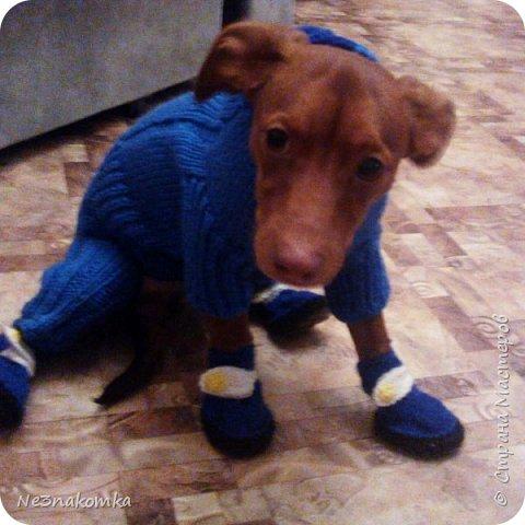 Всем привет! Хочу поделиться своим новым увлечением , а именно: вязание нарядов для животных.  фото 7