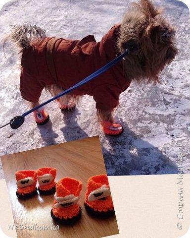 Всем привет! Хочу поделиться своим новым увлечением , а именно: вязание нарядов для животных.  фото 9