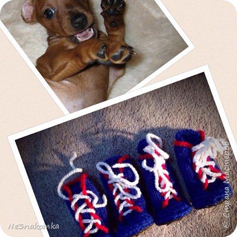 Всем привет! Хочу поделиться своим новым увлечением , а именно: вязание нарядов для животных.  фото 10