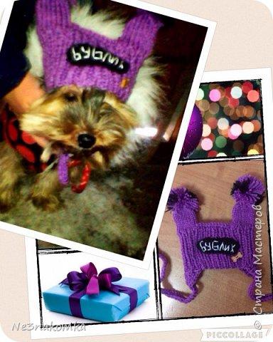 Всем привет! Хочу поделиться своим новым увлечением , а именно: вязание нарядов для животных.  фото 11