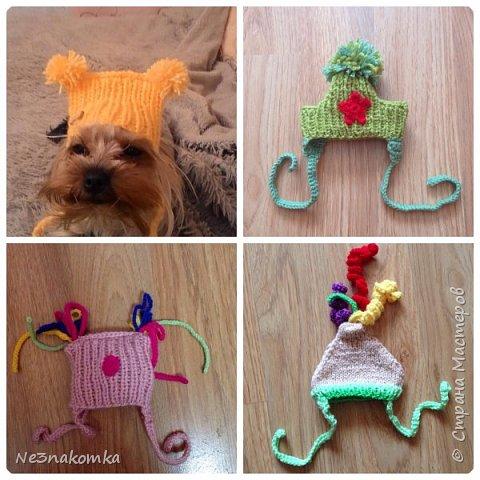 Всем привет! Хочу поделиться своим новым увлечением , а именно: вязание нарядов для животных.  фото 3