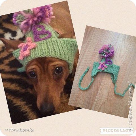 Всем привет! Хочу поделиться своим новым увлечением , а именно: вязание нарядов для животных.  фото 13