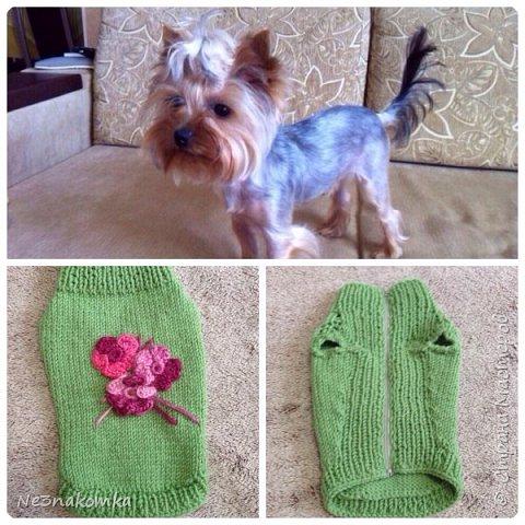 Всем привет! Хочу поделиться своим новым увлечением , а именно: вязание нарядов для животных.  фото 12