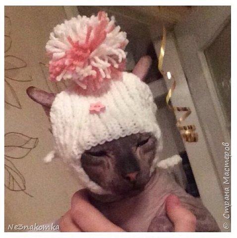 Всем привет! Хочу поделиться своим новым увлечением , а именно: вязание нарядов для животных.  фото 15