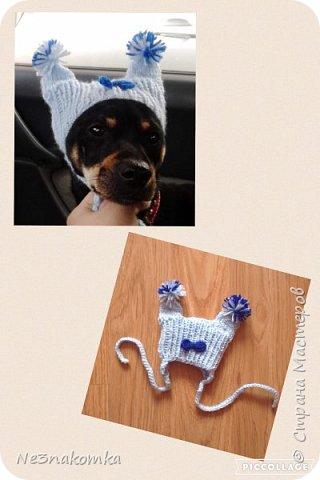 Всем привет! Хочу поделиться своим новым увлечением , а именно: вязание нарядов для животных.  фото 16