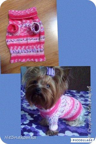 Всем привет! Хочу поделиться своим новым увлечением , а именно: вязание нарядов для животных.  фото 17