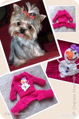 Всем привет! Хочу поделиться своим новым увлечением , а именно: вязание нарядов для животных.  фото 4