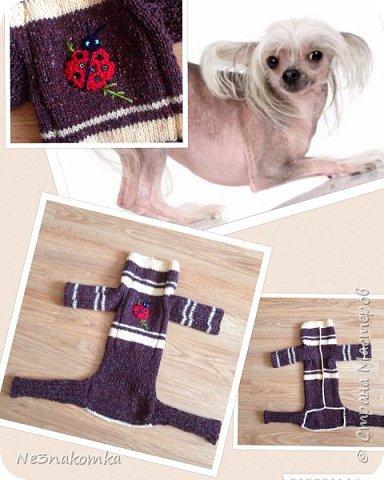 Всем привет! Хочу поделиться своим новым увлечением , а именно: вязание нарядов для животных.  фото 6