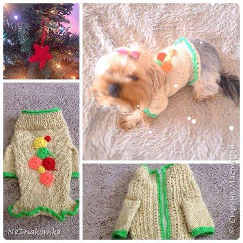 Всем привет! Хочу поделиться своим новым увлечением , а именно: вязание нарядов для животных.  фото 14
