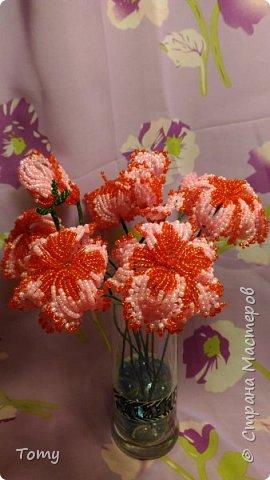 Цветы без названия фото 3