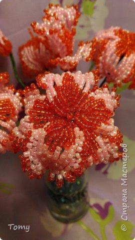 Цветы без названия фото 2