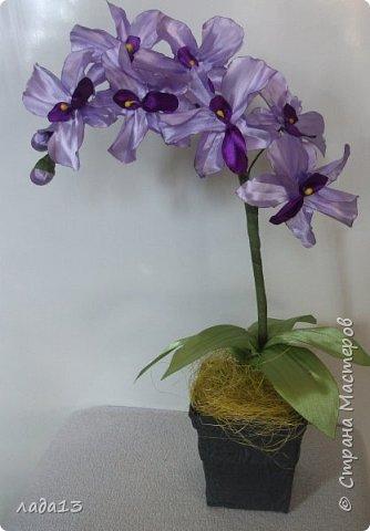 вот такие орхидеи появились у меня. фото 3