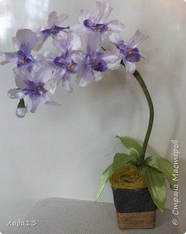вот такие орхидеи появились у меня. фото 2
