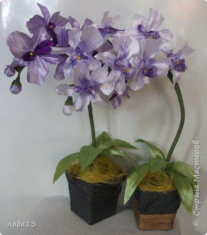 вот такие орхидеи появились у меня. фото 1