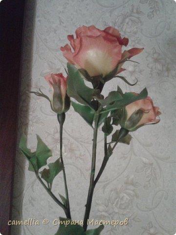 И снова розы. фото 7