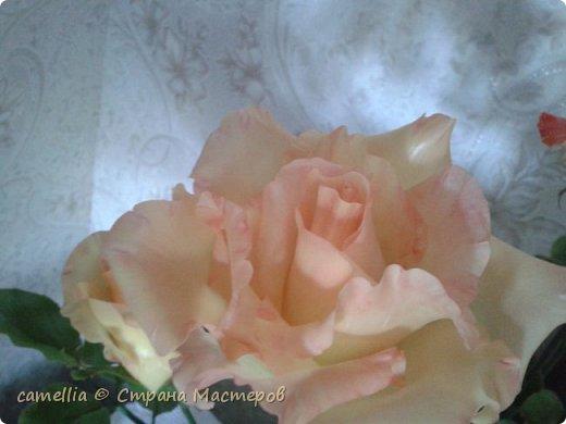 И снова розы. фото 5