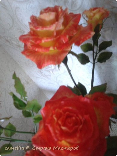 И снова розы. фото 6