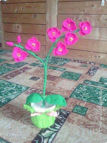 Моя первая орхидейка. фото 2