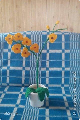Моя первая орхидейка. фото 1