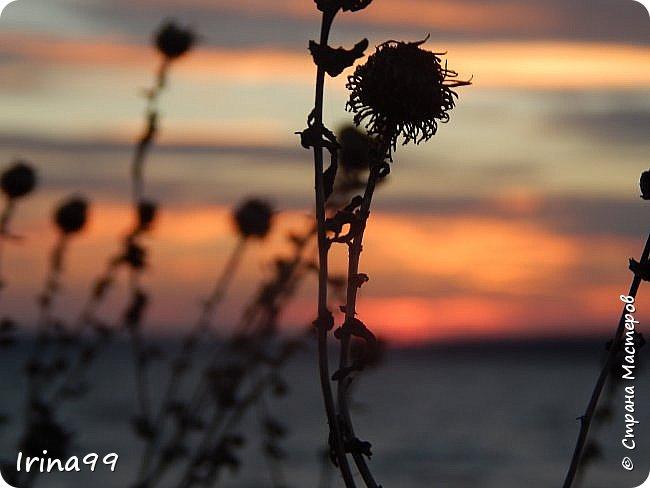 С Весной Вас,дорогие мои! С первыми цветами..с солнышком,с теплом, с хорошим настроением,вдохновением. Пусть  эта весна будет у все доброй.... Ах, сколько же  фотографий я вам не показала.... исправляюсь! Начинаю вот такой красоты....У нас уже всё цветёт! фото 6