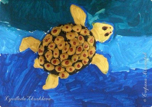 Морская черепаха фото 3
