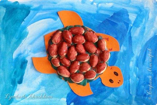 Морская черепаха фото 6