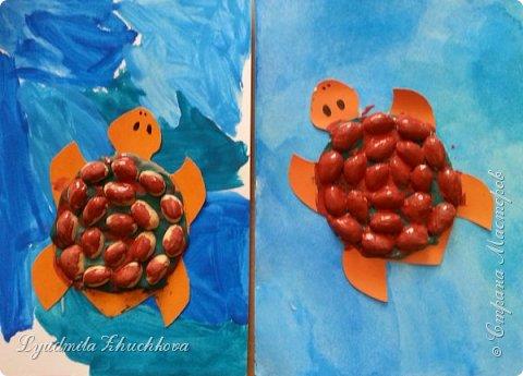Морская черепаха фото 8