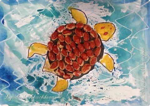 Морская черепаха фото 4