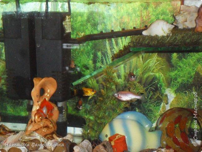 Мой аквариум фото 2