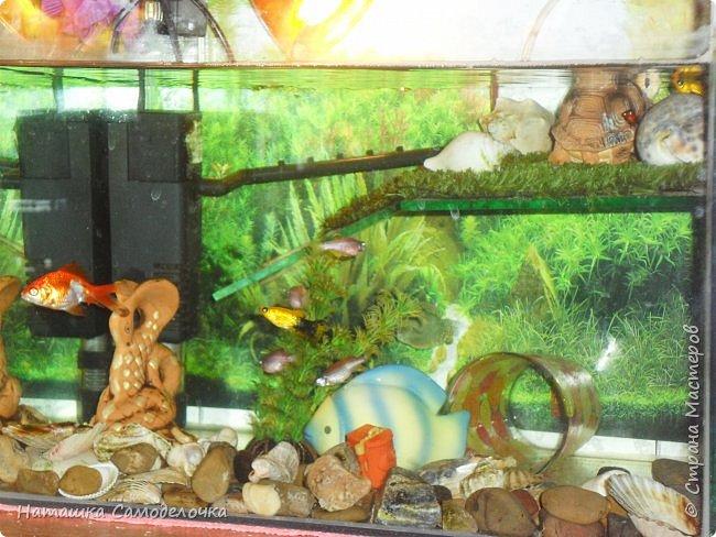 Мой аквариум фото 3