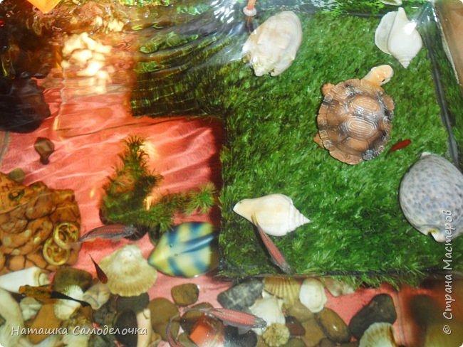 Мой аквариум фото 1