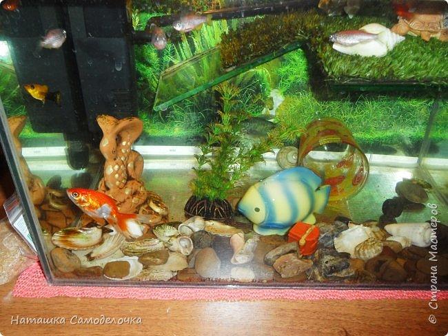 Мой аквариум фото 4