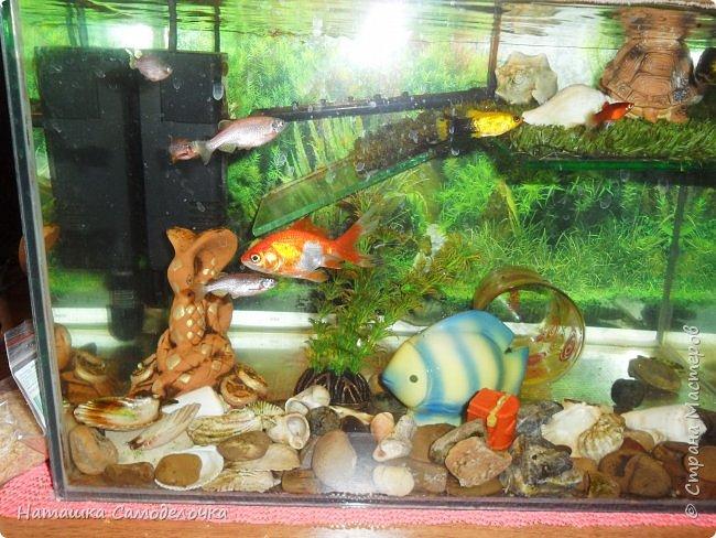 Мой аквариум фото 5