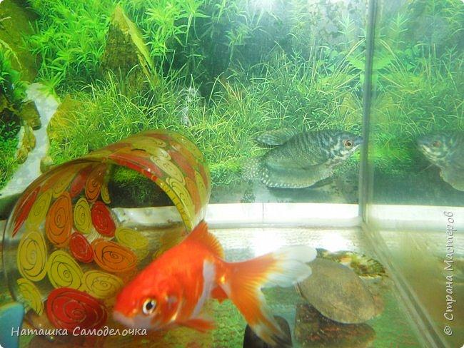 Мой аквариум фото 6