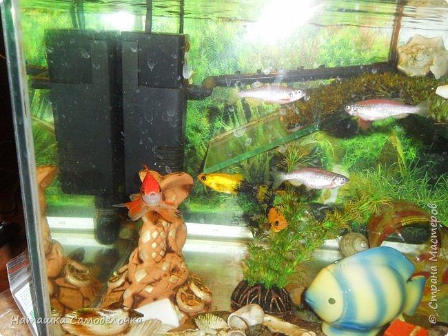 Мой аквариум фото 7