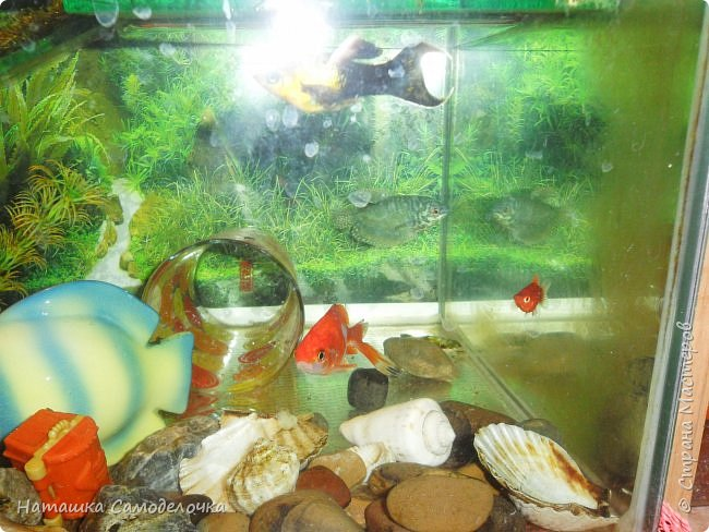 Мой аквариум фото 9