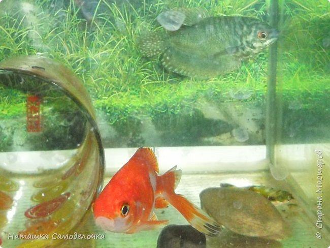 Мой аквариум фото 8