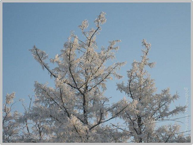 Все фотографии сделаны мною в начале января не помню точно какого года в Амурской области в г. Зея.. Там обычно, до начала ветров, до февраля, царствует такая красота. Основные фото сделаны на берегу реки Зея. Она, убегая от Зейской ГЭС,  долго не замерзает, что и дает возможность любоваться чудными пейзажами.   фото 28