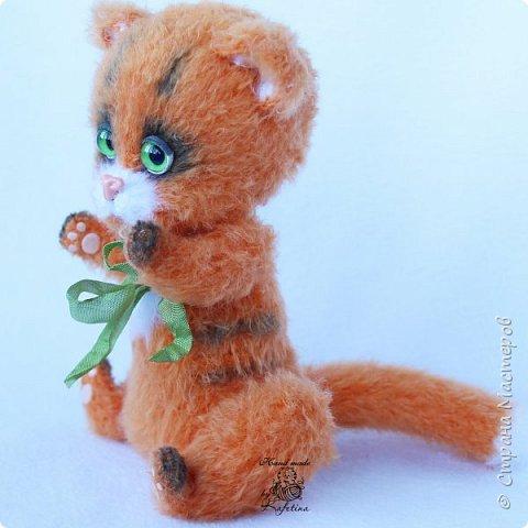 Кот Тигра фото 3