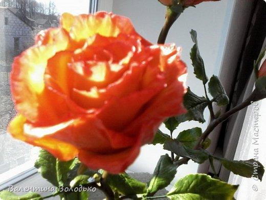 Добрый день мастера и мастерицы!!!Розы меня не отпускают.Смотрите новую партию. фото 12