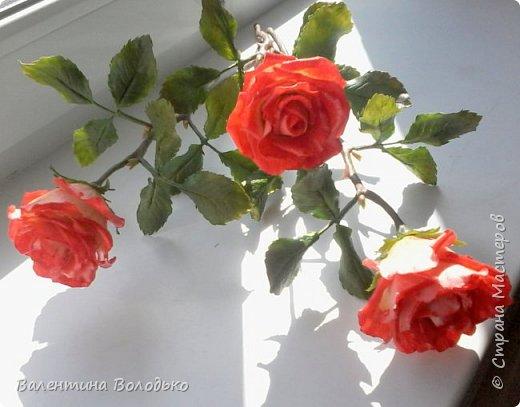Добрый день мастера и мастерицы!!!Розы меня не отпускают.Смотрите новую партию. фото 3