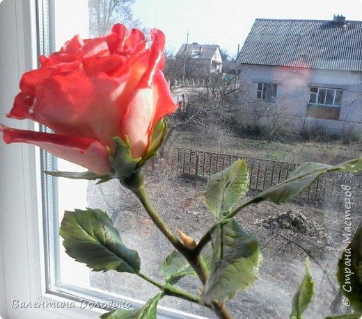 Добрый день мастера и мастерицы!!!Розы меня не отпускают.Смотрите новую партию. фото 5