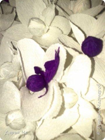 """""""Сто и ОДНА орхидея""""  МОИ ОРХИДЕИ  Жду мыслей тысячи касаний,  как ждёт младенец молока,  как ждёт искусство дарований,  как ждёт учёба дурака..   Я жду рождения идеи,  чтоб обратить её в цветы.  И будут пахнуть орхидеи  на благо общей суеты.   Автор: ВИТАЛИ ВИДАЛЬ  Настенное панно. Общий размер - 160 см х 90 см. Размер цветка 70 см х 60 см.  Состав материалов: бумага гофрированная, нитки, клей, пеноплекс, сетка флористическая, ветки сосновые, поролон, зубочистки, краски гуашевые. Состав конфет: """"Sharlet"""" трюфель 100 штук. фото 7"""
