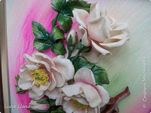Розы и виноград фото 11