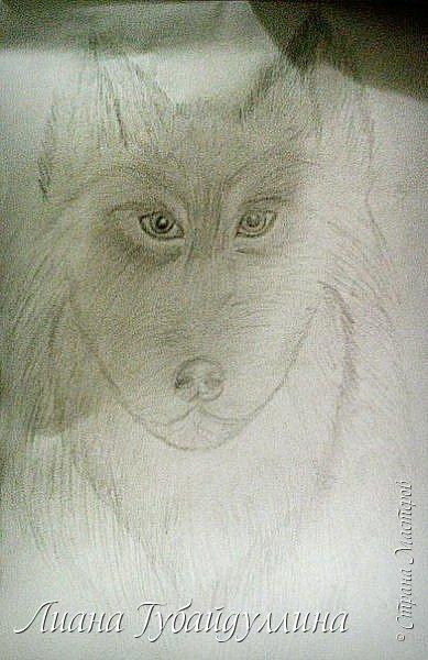 Мой последний рисунок  фото 5