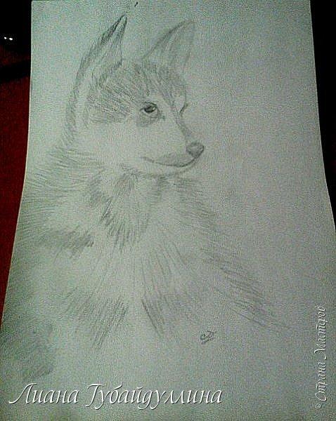Мой последний рисунок  фото 4