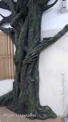 """Вот такой дуб  вырос в нашем 1-ом """"В"""" за два месяца.... фото 13"""