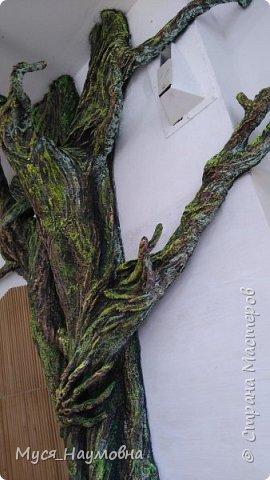 """Вот такой дуб  вырос в нашем 1-ом """"В"""" за два месяца.... фото 14"""