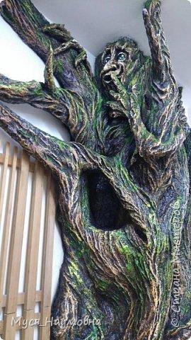 """Вот такой дуб  вырос в нашем 1-ом """"В"""" за два месяца.... фото 19"""